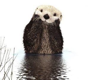 Embarrassed-looking otter