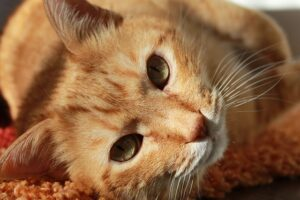 An orange tabby cat